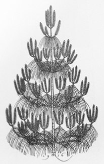 Jacques Hnizdosky, Young Pine, 1976